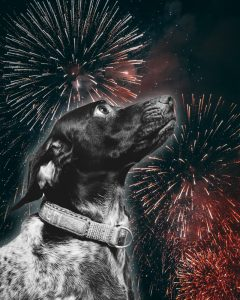 Keeping Your Dog Calm with Fireworks