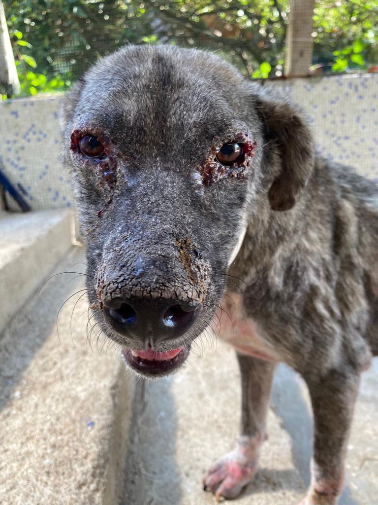 Angels for Animals Rescue Dog